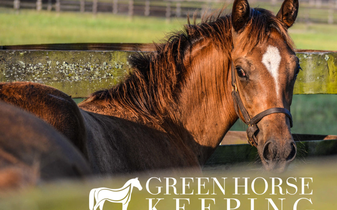 Green Horsekeeping Guide