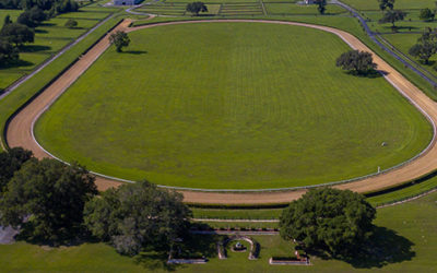 Guide To Buying A Horse Farm For Your Future Race Horse
