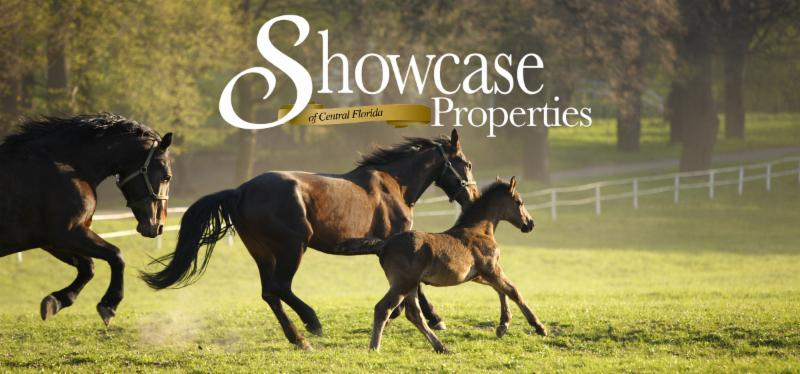 April Newsletter | Ocala Americana: Rockwell and Green Horse Keeping
