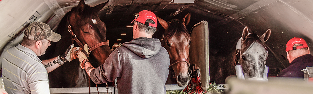 By Land Or By Air: Transporting Your Horses Safely and Efficiently