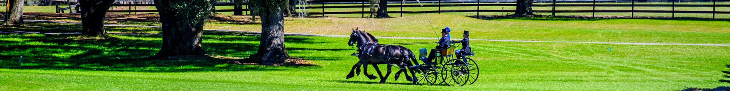 Three people driving a team of horses across a park.