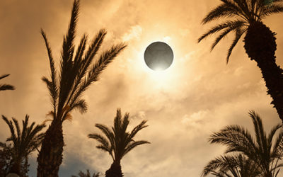 The Solar Eclipse | What to Expect for Your Animals