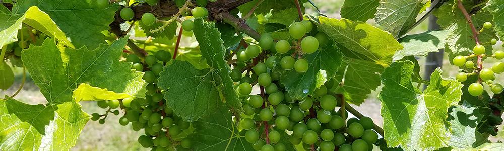 Community Spotlight | The Sokol's Katya Vineyards