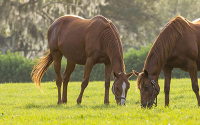 Choosing The Right Ocala Equestrian Property