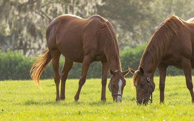 Choosing The Right Ocala Equestrian Property