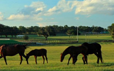 Selling Horse Country | Showcase Represents Iconic Padua Stables and Bridlewood Farm
