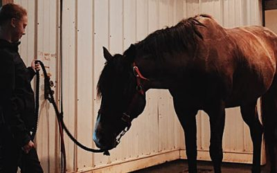 COVID-19 and Equine Safety: What Horse Owners and Equine Professionals Need to know