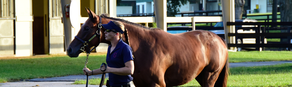 6 Tips For Enjoying Your First Thoroughbred Sale
