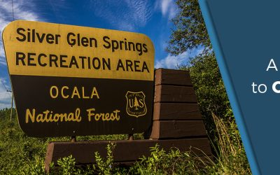 Florida Tourism Series | A Visitors' Guide to Ocala National Forest