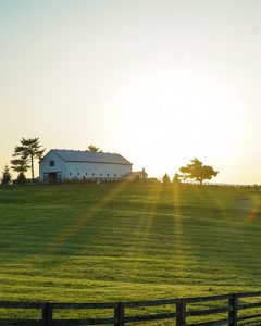 A horse farm at sunrise.