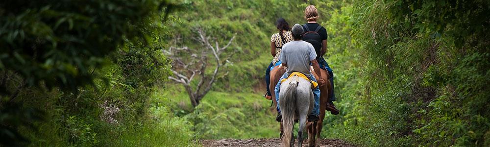 Horseback riders on a trail.