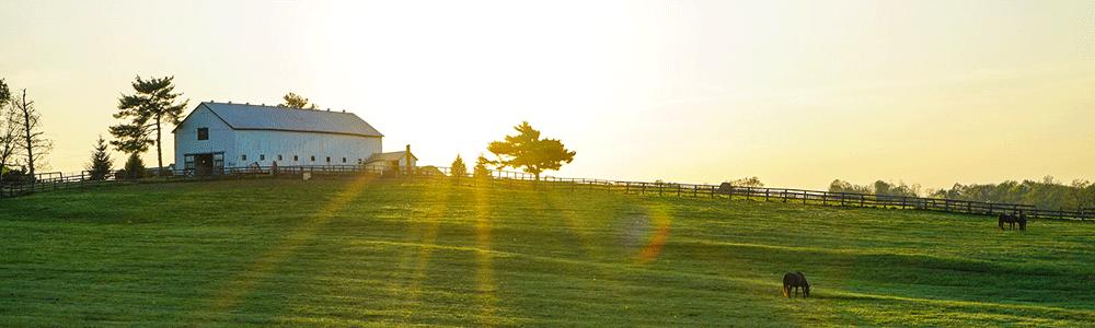 A horse farm at sunrise.