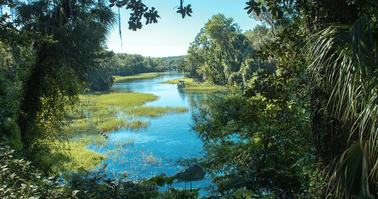 A lovely river view of a Marion County waterway