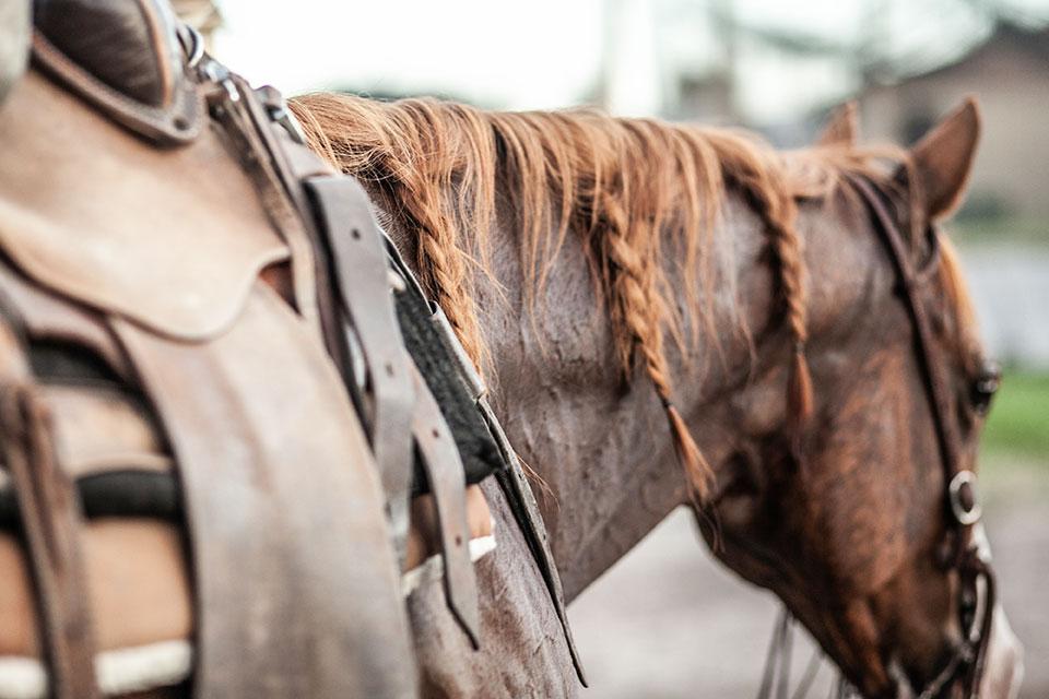 A western saddled horse with braided hair.