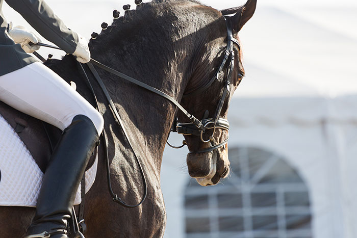 A horse and rider at a dressage event