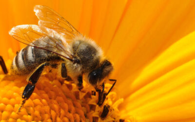 Central Florida Beekeeping | Why Beekeepers Are Great For Florida & How You Can Get Involved