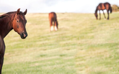 Horse Country Style: 4 Benefits of Living in an Equine Community