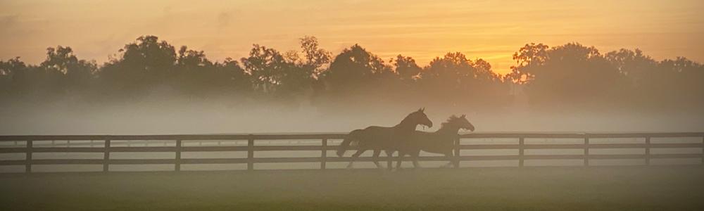 Community Spotlight   Horse Farms Forever