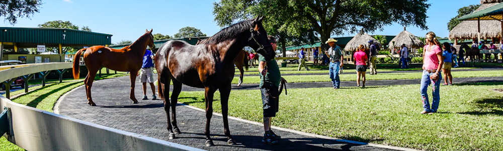Community Spotlight | Ocala Breeders' Sales Tom Ventura
