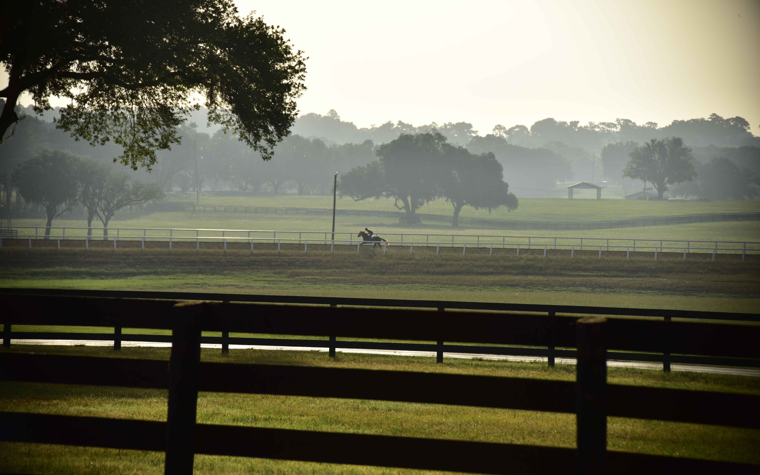 A jockey riding a horse on the track at Bridlewood Farm