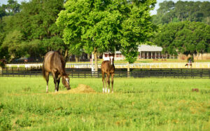 A mare and foal grazing.