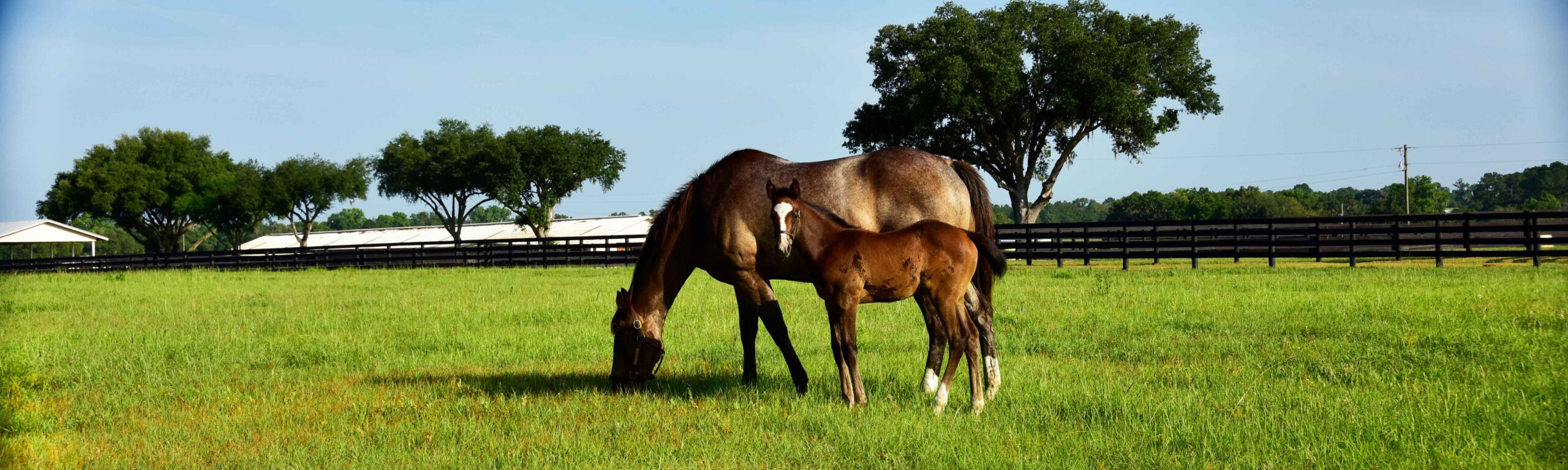 A mare and foal at Bridlewood Farm.