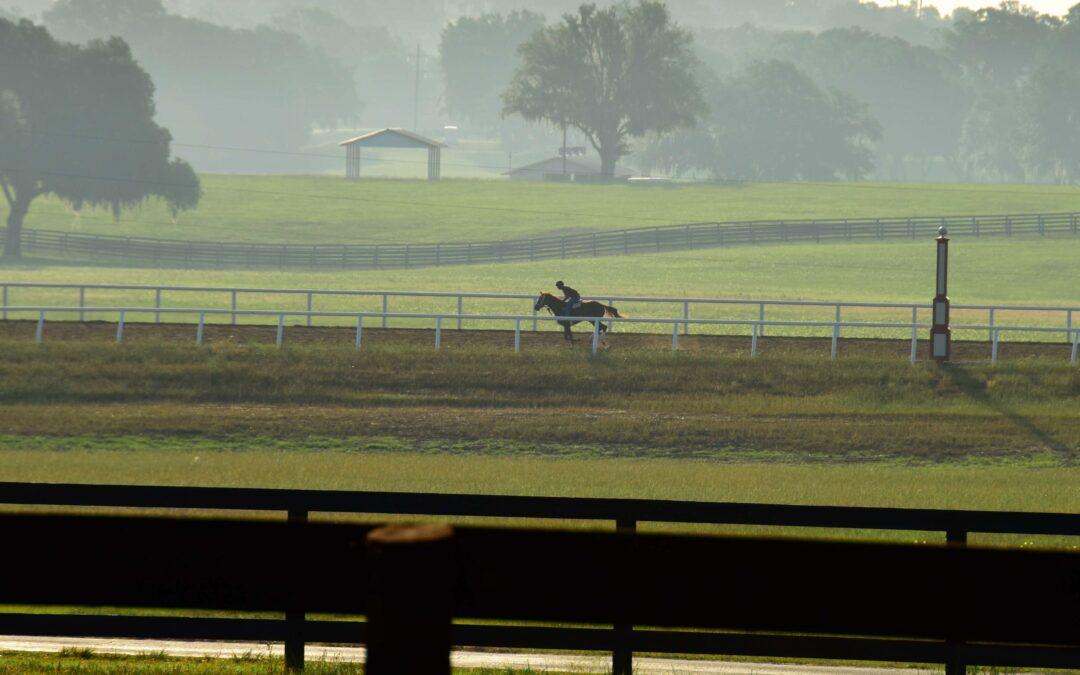 Iconic Horse Farms | Bridlewood Farm