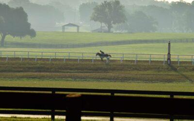 Iconic Horse Farms   Bridlewood Farm