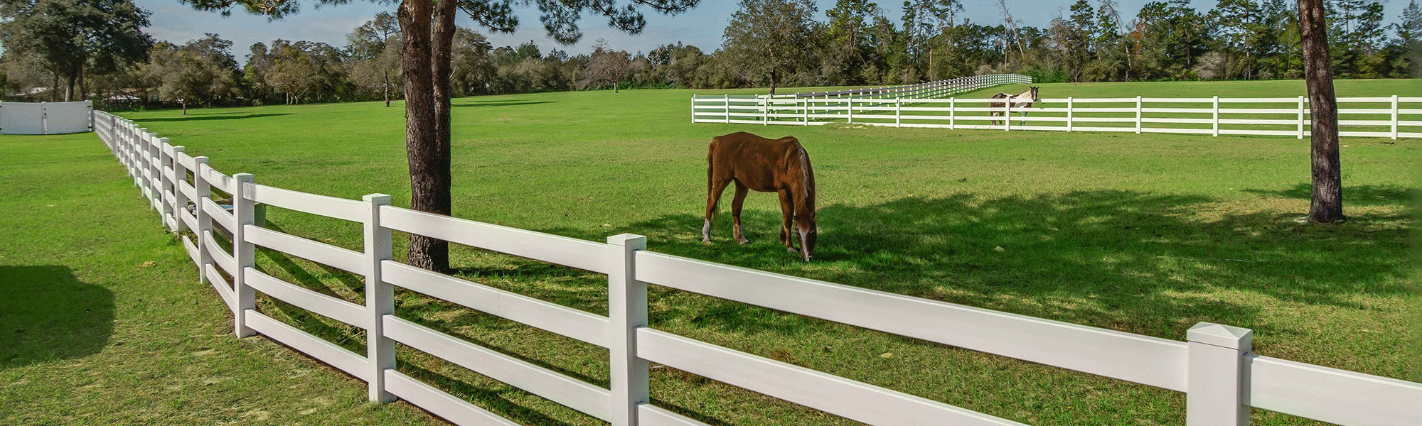 A horse grazing beside a white fence.