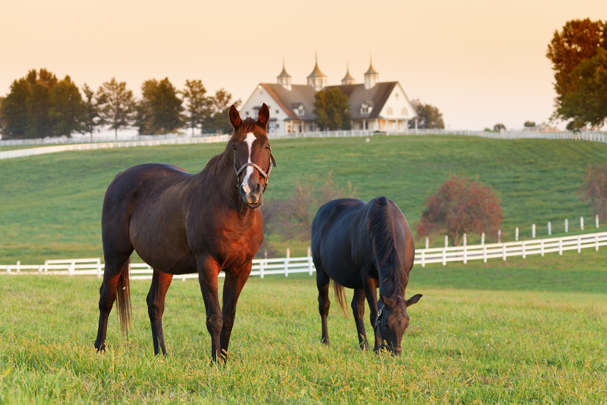 Horses grazing inside a green paddock at sunset.