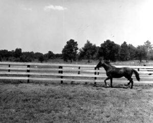Needles at Bonnie Heath Farm circa 1960