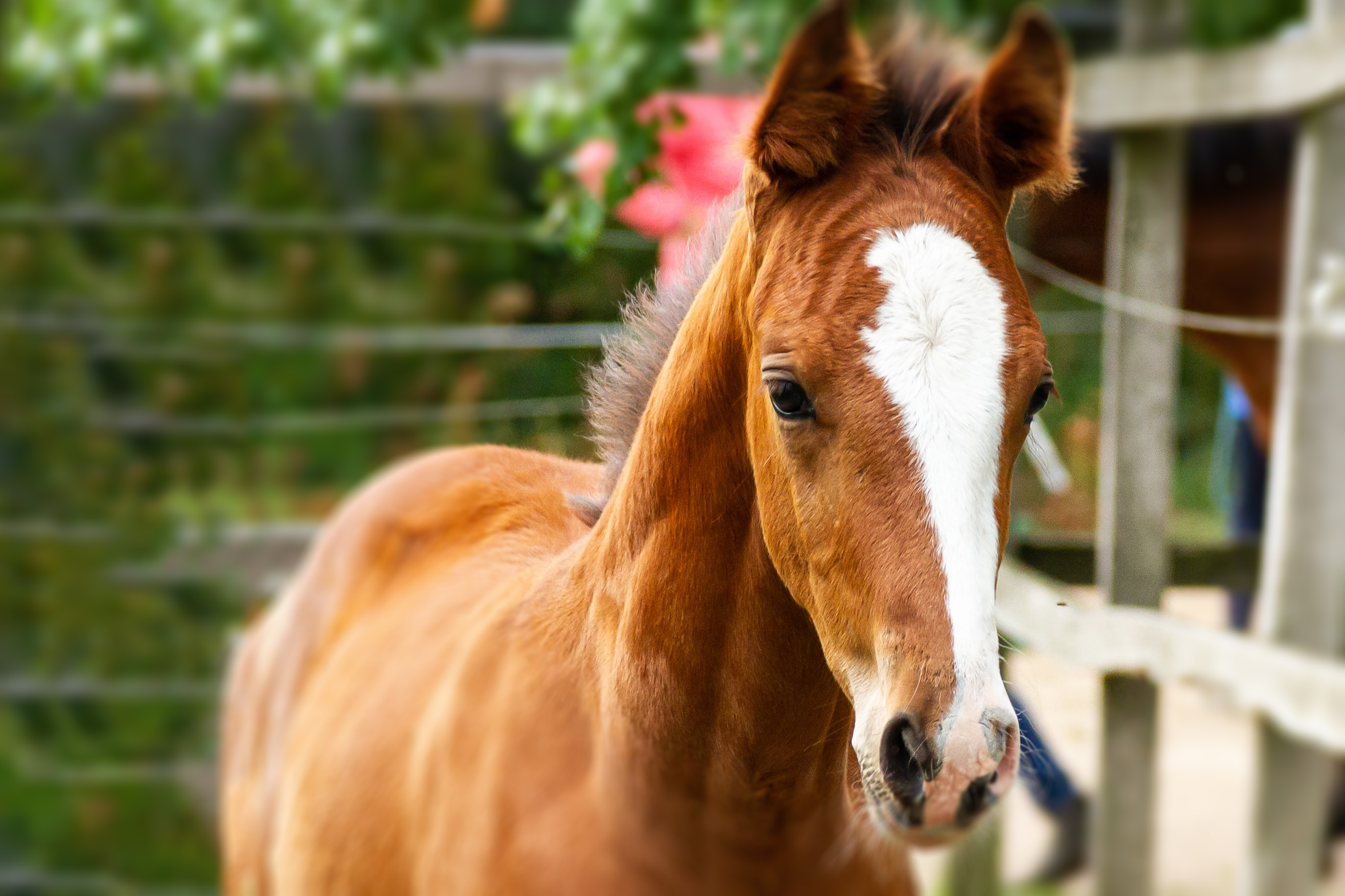 A young horse.