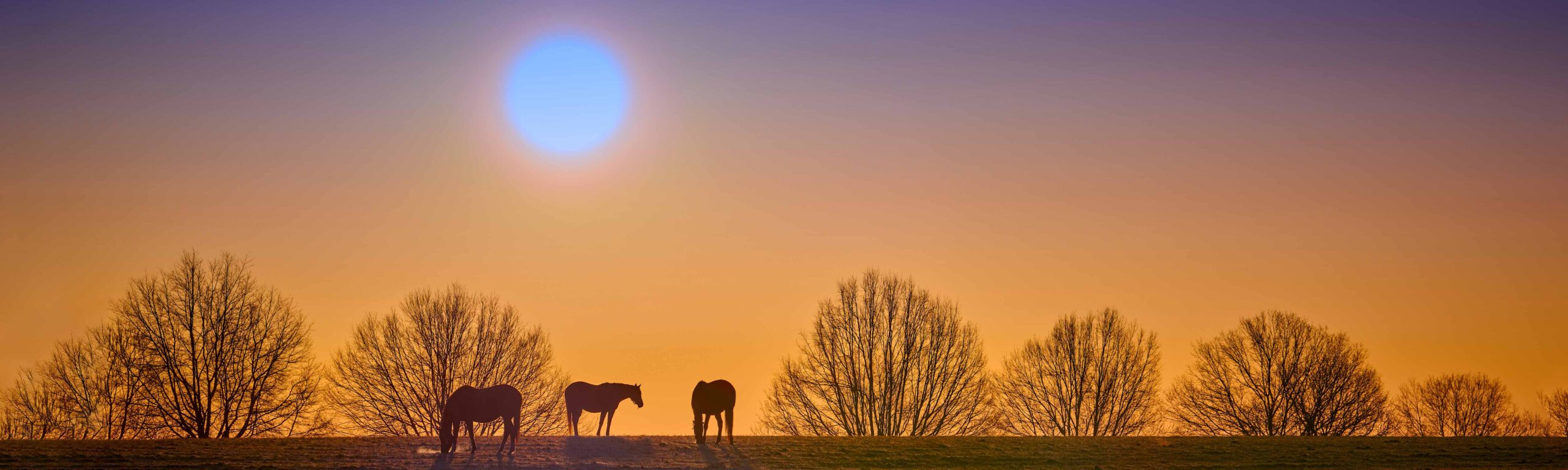 Thoroughbreds on a hill at sunset.
