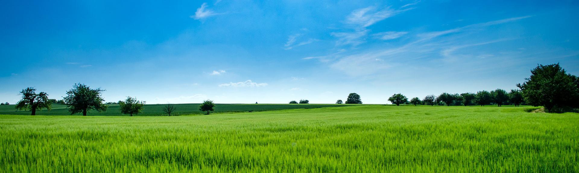 Rolling green hills of farm land.